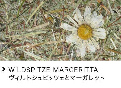 WILDSPITZE MARGERITTA ヴィルトシュピッツェとマーガレット