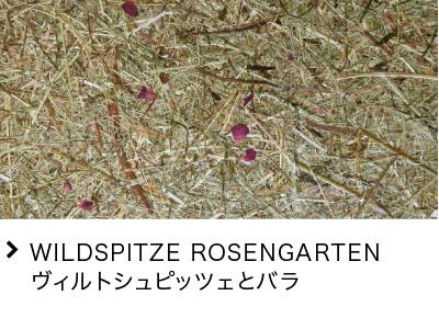 WILDSPITZE ROSENGARTEN ヴィルトシュピッツェとバラ
