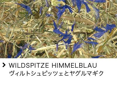WILDSPITZE HIMMELBLAU ヴィルトシュピッツェとヤグルマギク