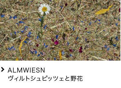 ALMWIESN ヴィルトシュピッツェと野花